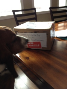 Ranger inspecting the special parcel